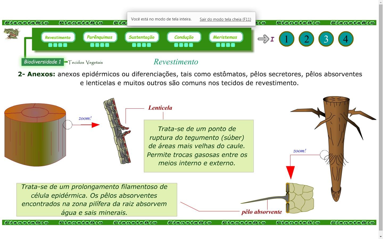 Biodiversidade 1 - Tecidos vegetais
